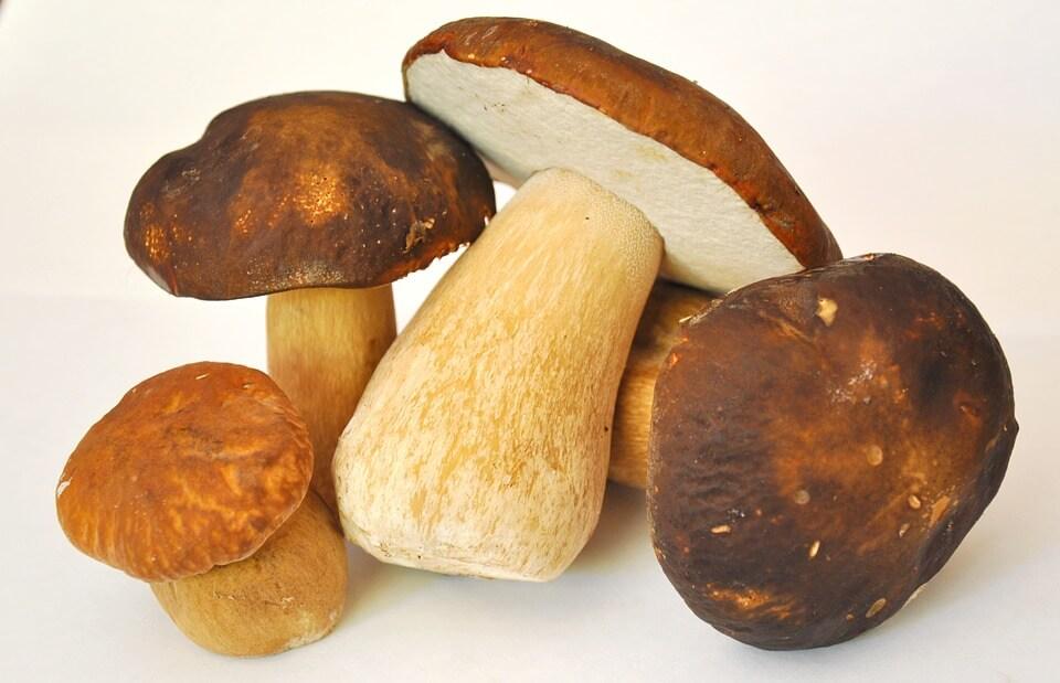 какие грибы можно детям