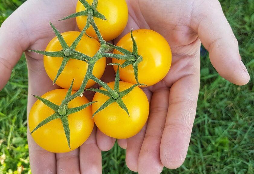 когда ребенку можно помидоры