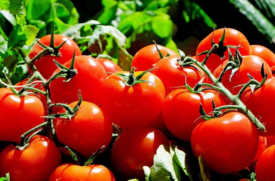 помидор в год ребенку