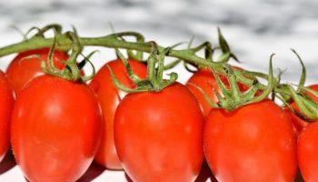 Можно ли детям помидоры: какие, с какого возраста