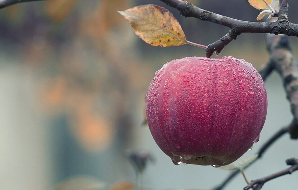 яблоки на зиму ребенку