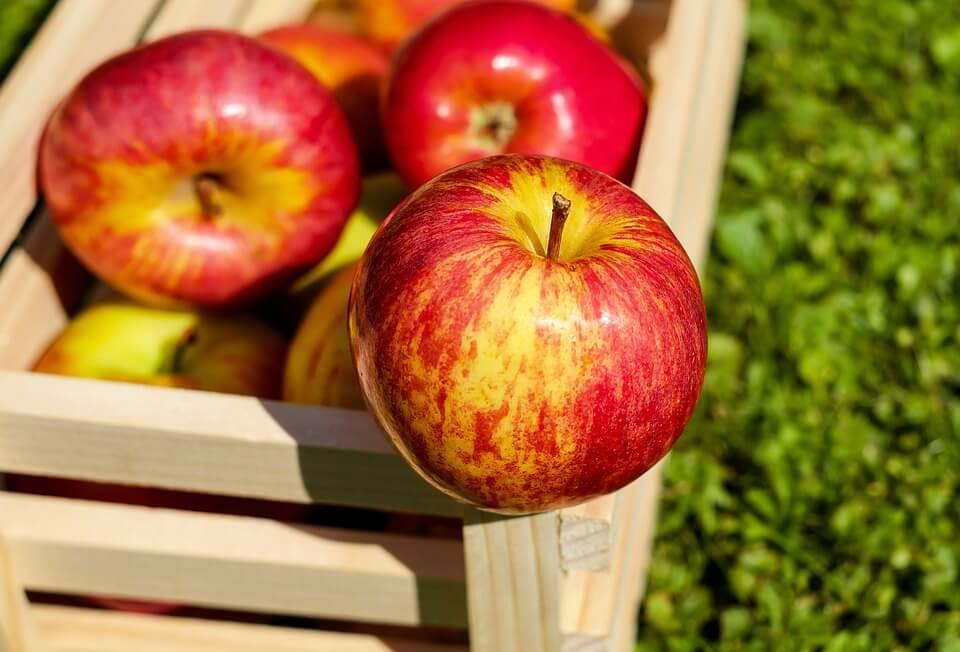 свежее яблоко ребенку