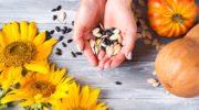 Подсолнечные и тыквенные семечки детям: с какого возраста и сколько давать