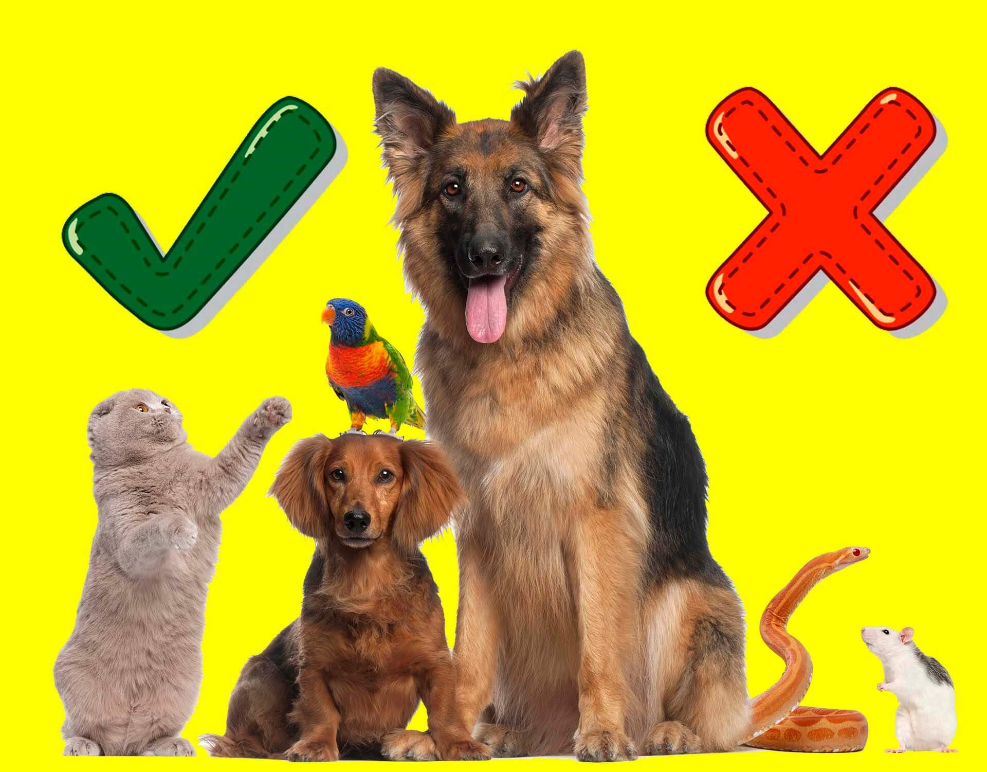 тест про животных
