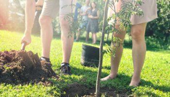 именное дерево в честь рождения ребенка в москве